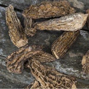 Spitzmorchel getrocknet Bio Qualität
