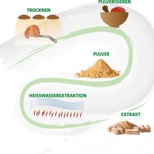 Herstellung Trockenpilze und Vitalpilze